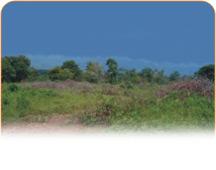 Земельные участки в Геленджике